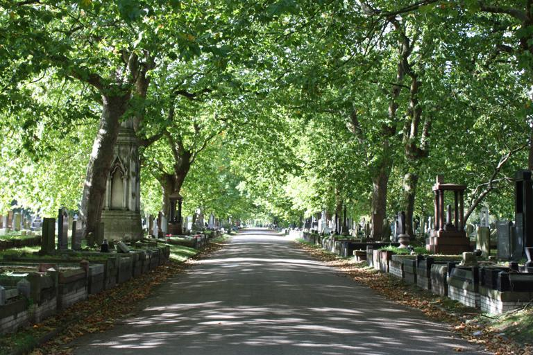 Tree lined avenue
