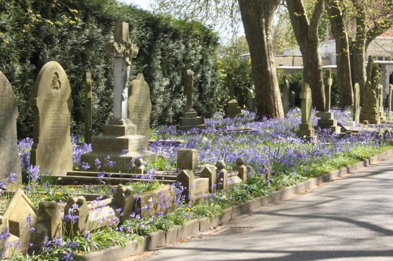Bluebell lined avenue